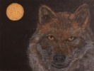 A wolf portrait, with full moon behind his head